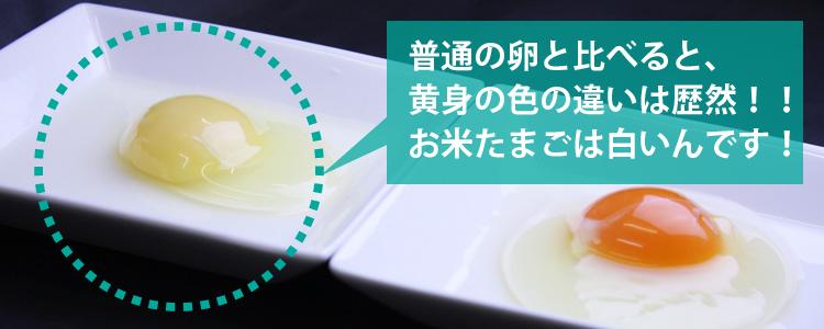 お米たまごの色